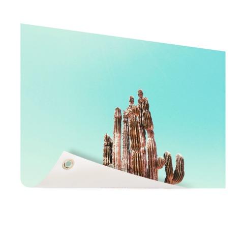 Cactus onder blauwe hemel print Tuinposter