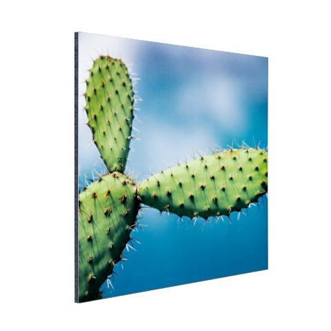 Cactus tegen blauwe lucht Aluminium