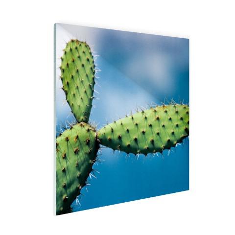 Cactus tegen blauwe lucht Glas