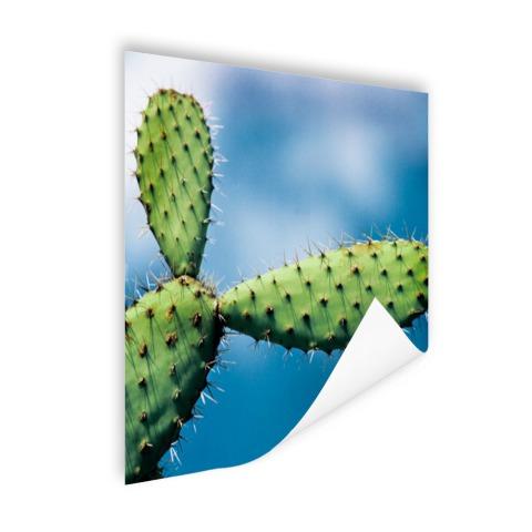 Cactus tegen blauwe lucht Poster