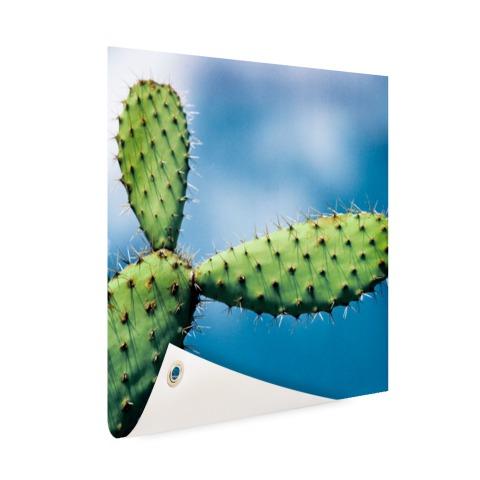 Cactus tegen blauwe lucht Tuinposter