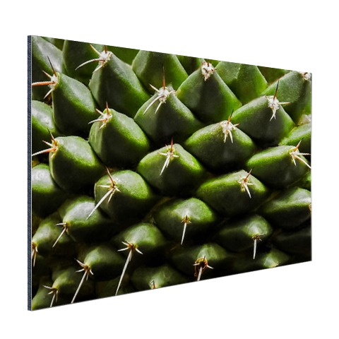 Cactuspatronen Aluminium