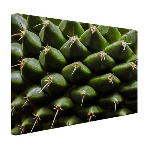 Cactuspatronen Canvas