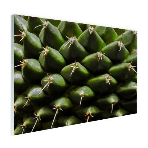 Cactuspatronen Glas