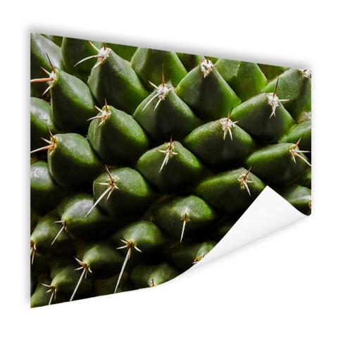 Cactuspatronen Poster