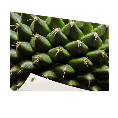 Cactuspatronen Tuinposter