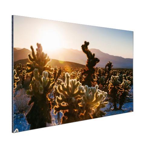 Cactusprint in de VS Aluminium