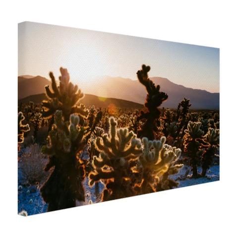 Cactusprint in de VS Canvas