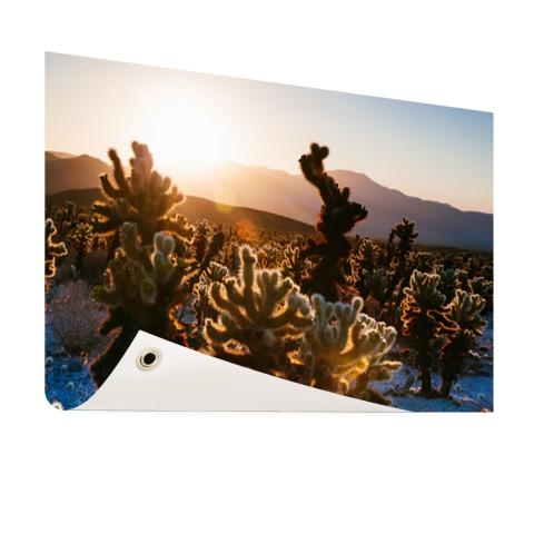 Cactusprint in de VS Tuinposter