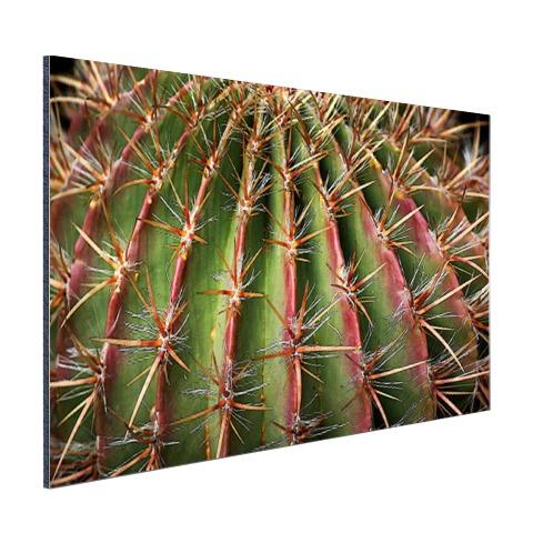 Close-up cactus fotoprint Aluminium