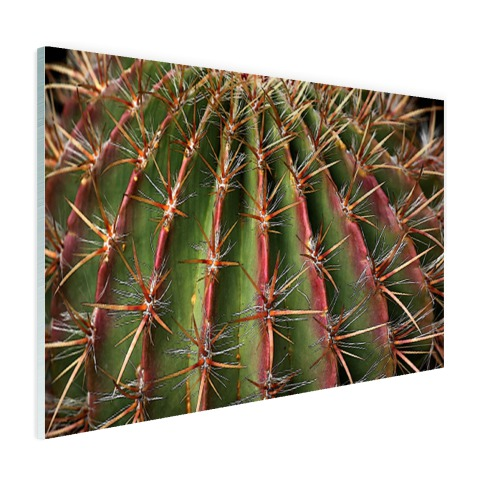 Close-up cactus fotoprint Glas