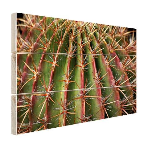 Close-up cactus fotoprint Hout