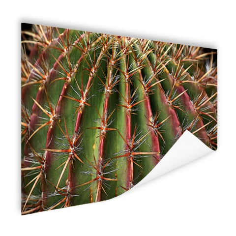 Close-up cactus fotoprint Poster