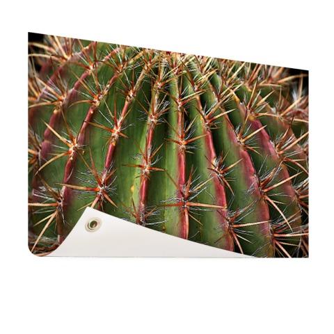 Close-up cactus fotoprint Tuinposter