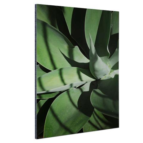 Close-up van de bladeren van een cactus Aluminium