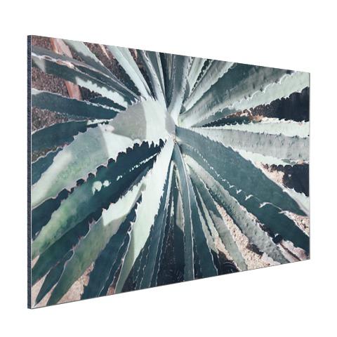 Close-upfoto van een cactus Aluminium