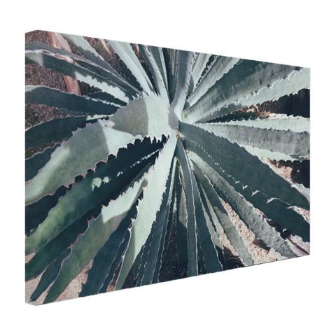 Close-upfoto van een cactus Canvas