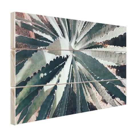 Close-upfoto van een cactus Hout