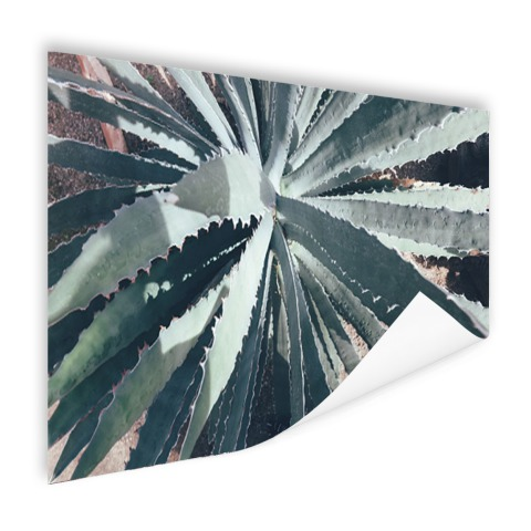Close-upfoto van een cactus Poster
