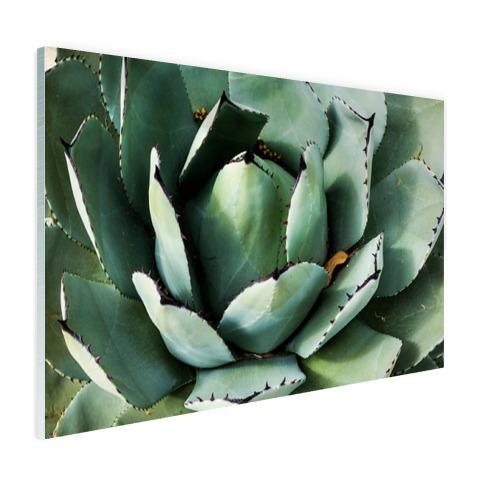 Detailfoto van een mintgroene cactus Glas
