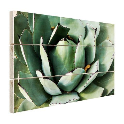 Detailfoto van een mintgroene cactus Hout