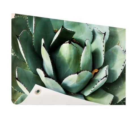 Detailfoto van een mintgroene cactus Tuinposter