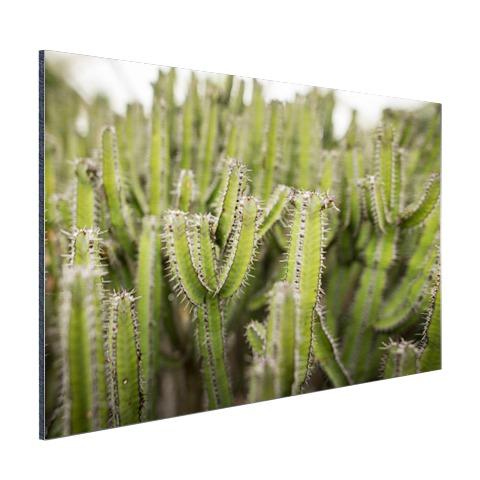 Groep cactusplanten Aluminium