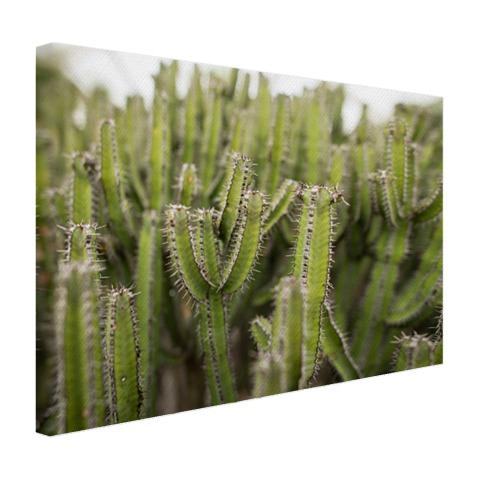 Groep cactusplanten Canvas