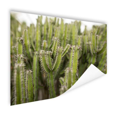 Groep cactusplanten Poster