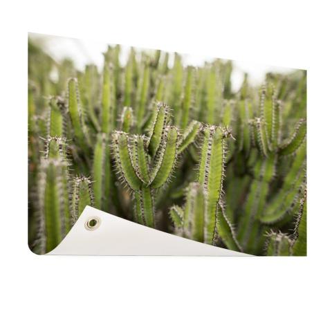 Groep cactusplanten Tuinposter