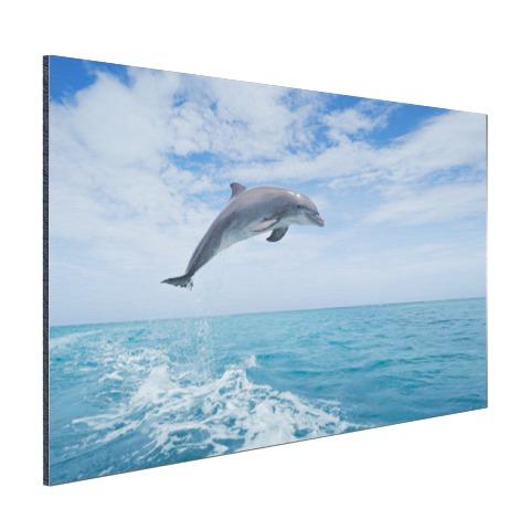 Bottlenose dolfijn springt Aluminium