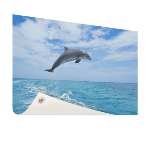 Bottlenose dolfijn springt Tuinposter