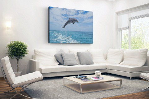 Bottlenose dolfijn springt Canvas