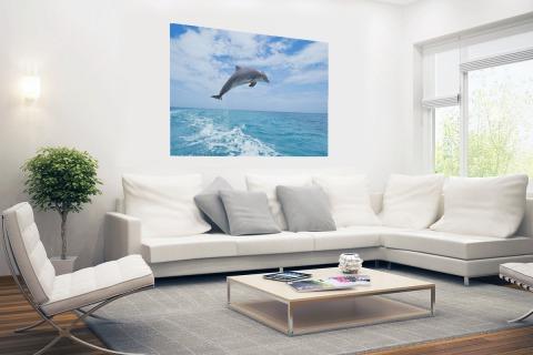 Bottlenose dolfijn springt Poster