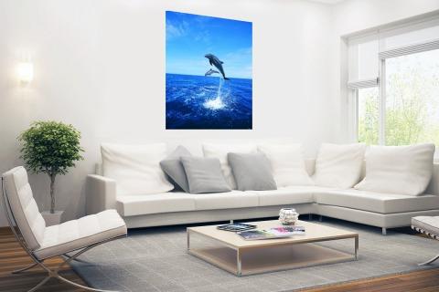 Dolfijn in blauw water Poster