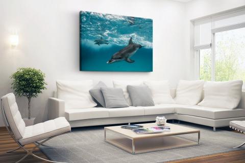 Dolfijnen zwemmend bij de Bahamas Canvas
