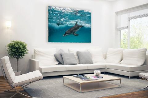 Dolfijnen zwemmend bij de Bahamas Hout