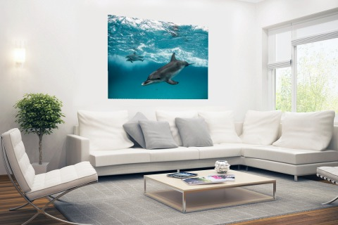 Dolfijnen zwemmend bij de Bahamas Poster