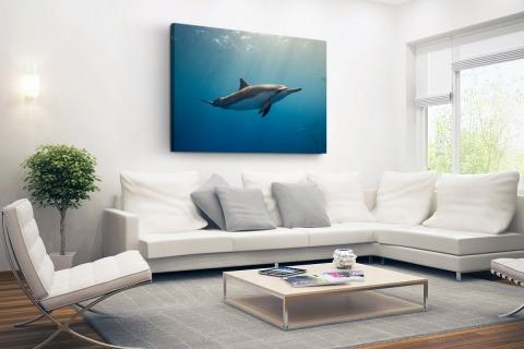 Fotoprint van een dolfijn Canvas
