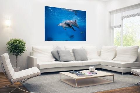 Spinner Dolfijnen in de Rode zee Egypte Poster