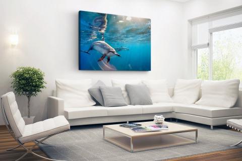 Spinner dolfijnen in helder water Canvas