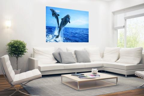 Springende dolfijnenfoto Poster