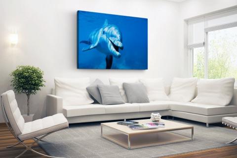 Tuimelaar dolfijn onder water Canvas