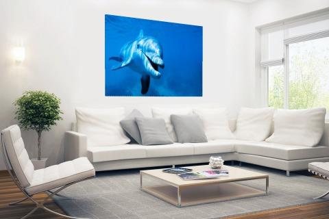 Tuimelaar dolfijn onder water Poster