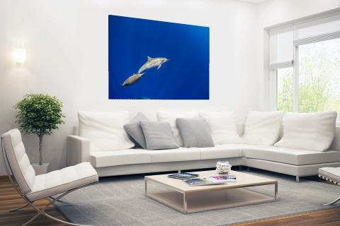 Zwemmende dolfijnen onderwater foto Poster