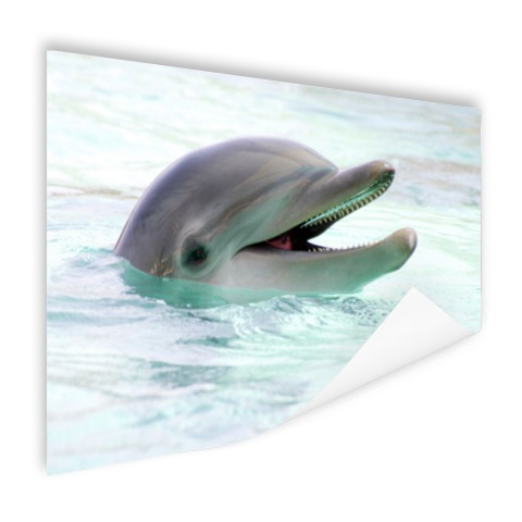 Close-up van een dolfijn in het water Poster