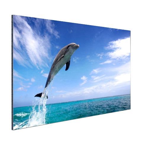 Dolfijn bij helder blauwe lucht foto Aluminium