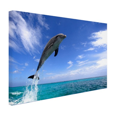 Dolfijn bij helder blauwe lucht foto Canvas