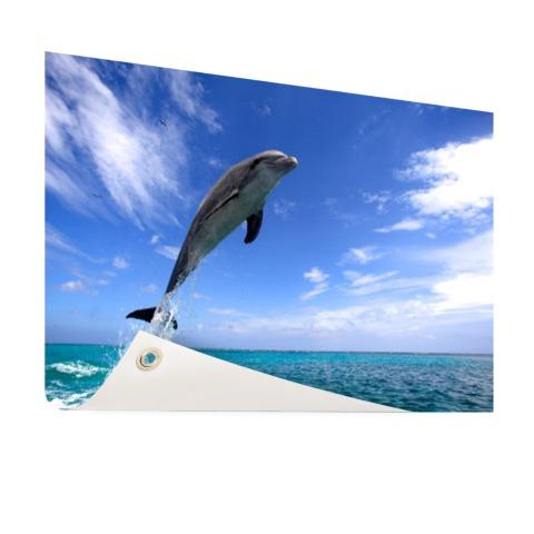 Dolfijn bij helder blauwe lucht foto Tuinposter