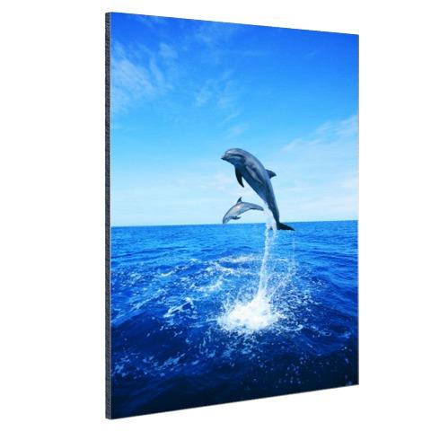 Dolfijn in blauw water Aluminium